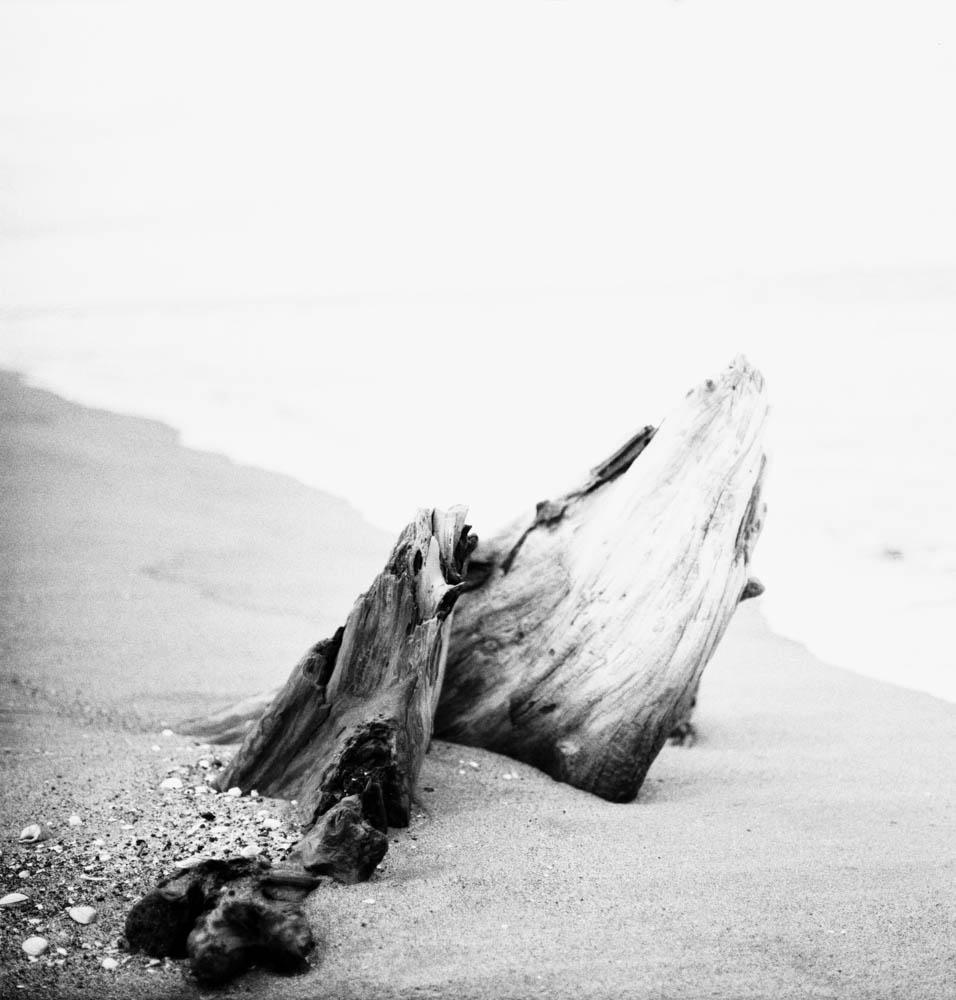Seaside Dreaming Humpbacks Pent - blindpoet | ello