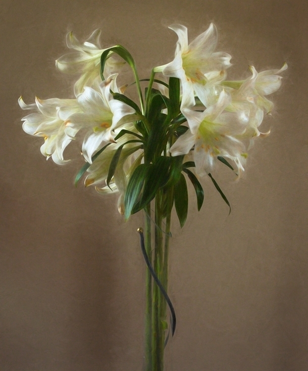 Lilies - bradverts | ello