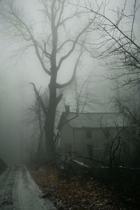pictures creepy woodsy places s - kseniaanske | ello