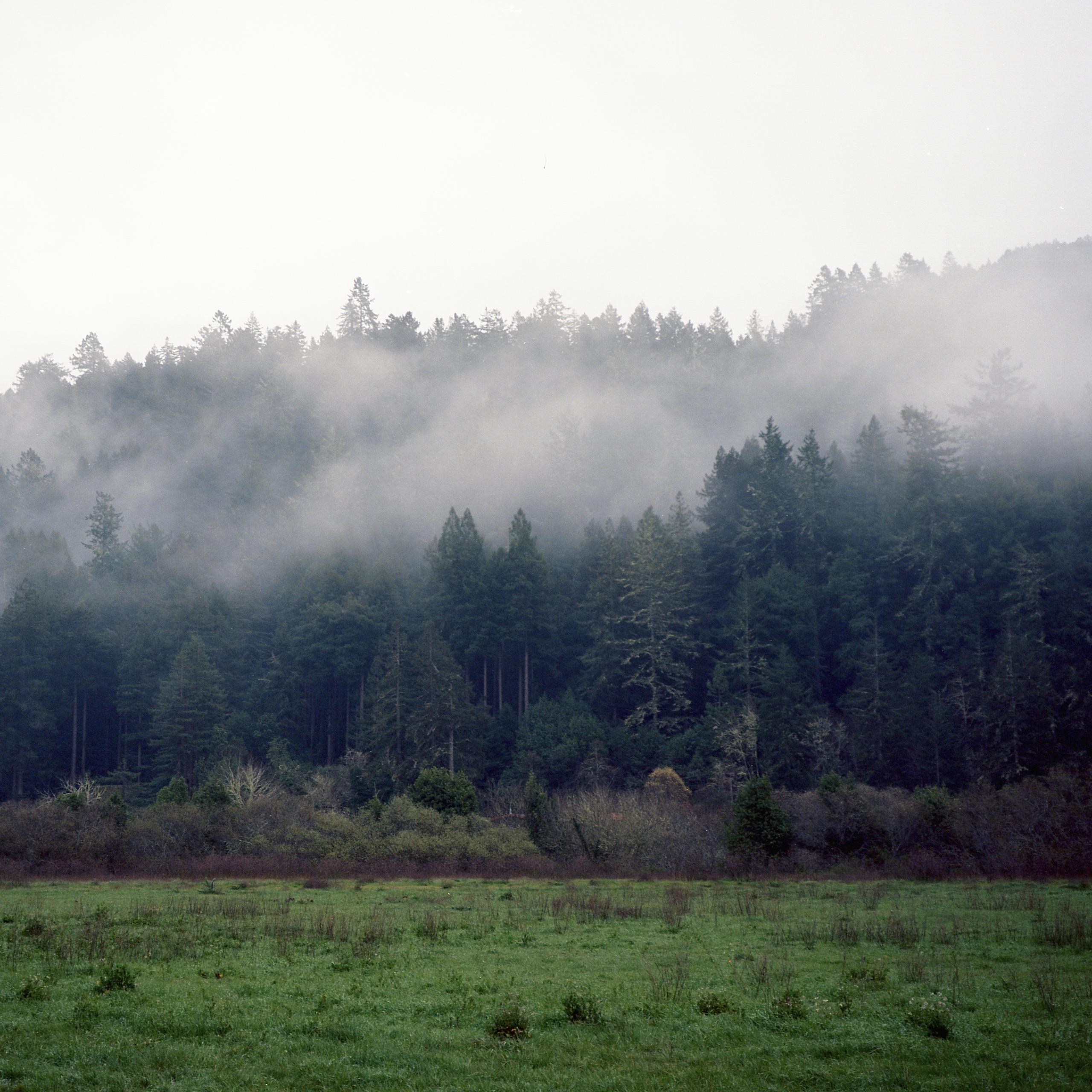 Green fog Kodak Ektar 100 Mamiy - biosfear | ello