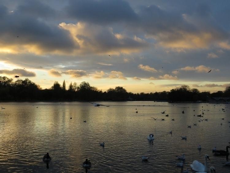 London, Hydepark, Pond, Park - willmoller | ello