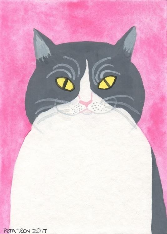 friend cat. Tonight Show Jimmy  - petatron | ello