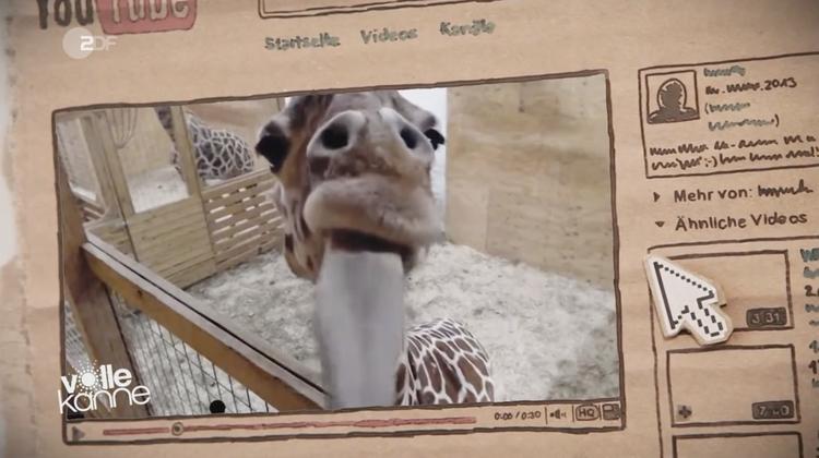 Eine schwangere Giraffe, die Fo - elrep   ello