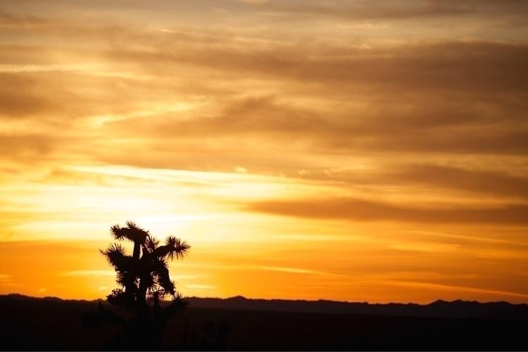 3/11 sunset Yucca tree . pod (a - bamps   ello