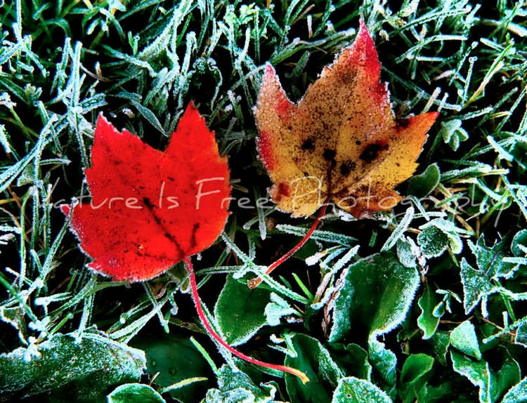interested changing seasons hap - natureisfree | ello