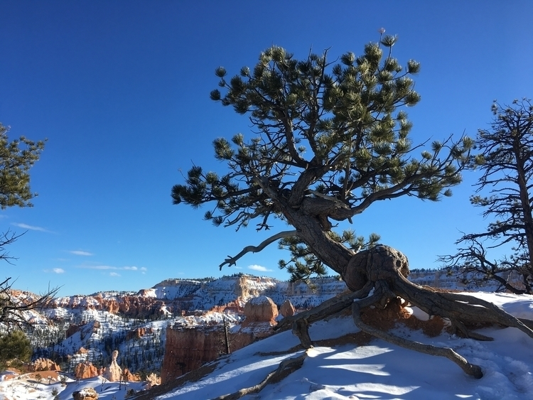 Bryce Canyon - dintystew | ello