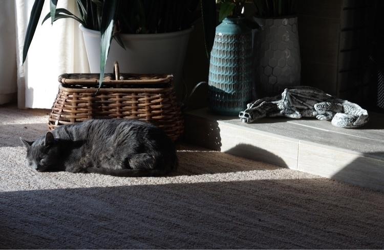 cat dragon Laying sunshine Warr - lucybootstoo   ello