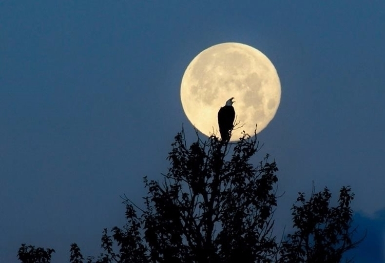 Howling moon??? share - tbiveteran   ello