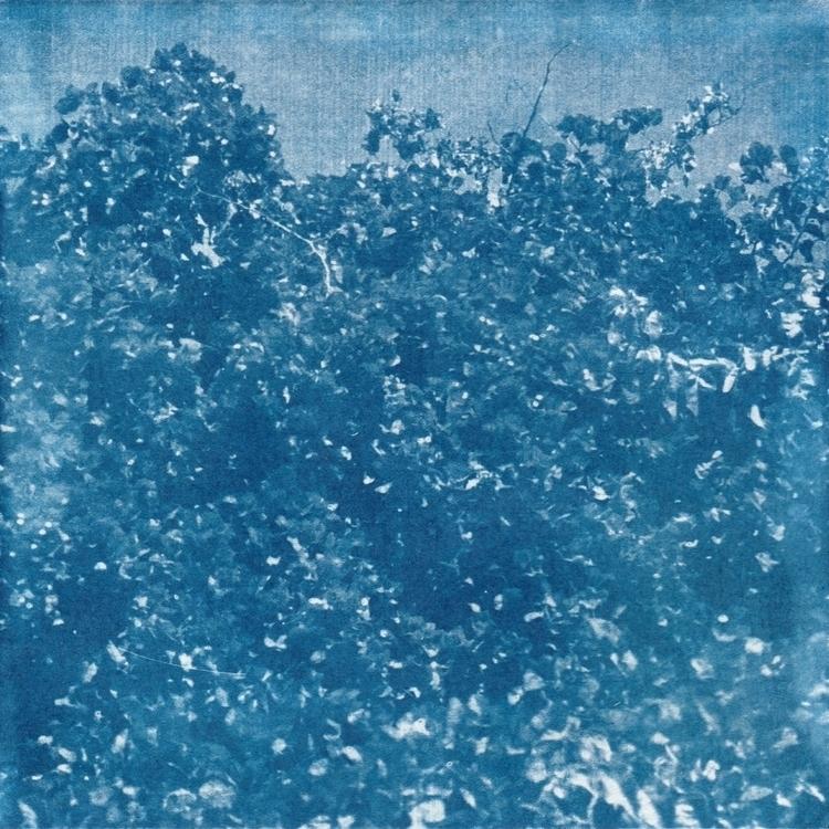 Cyanotype - Flowers - 2, cyanotype - acidecabine | ello