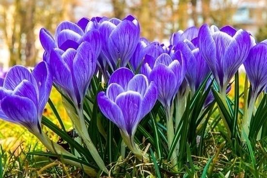Happy Spring Equinox! Weekly Ho - symbolicliving | ello