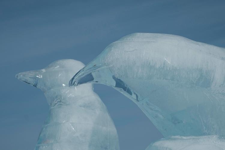 Asahikawa Winter Festival - Hokkaido - nickpitsas | ello