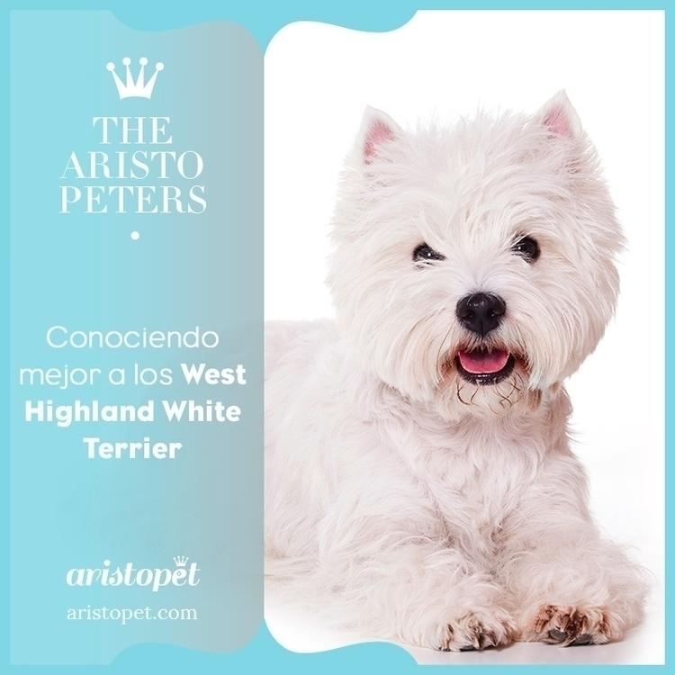 Los orígenes del West Highland  - aristopet | ello