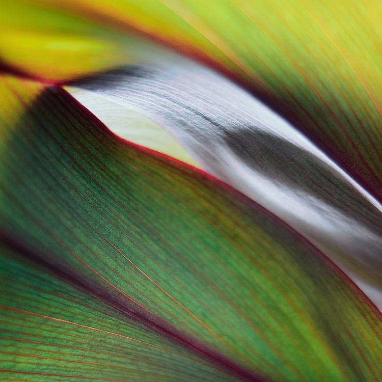 Leafy lines - leaf, leaves, plant - andreigrigorev | ello