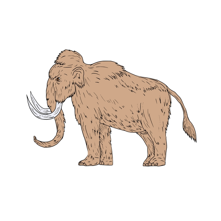 Woolly, Mammoth, Side, Drawing - patrimonio | ello