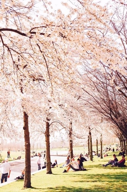 Amsterdam Bloom - bintphotobooks | ello
