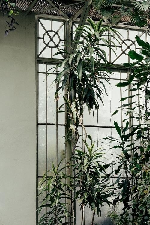 greenhouse, plants, window - maltejrichter | ello