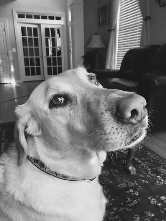 || Doggie - dog, blackandwhite, cute - sunivana | ello