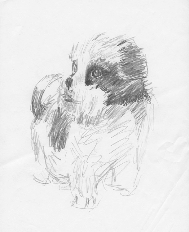 thought post fun drawing dogs,  - mhedges | ello
