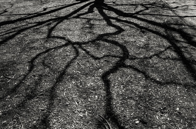 Tree Shadow | - photographer - seanrasmussen | ello