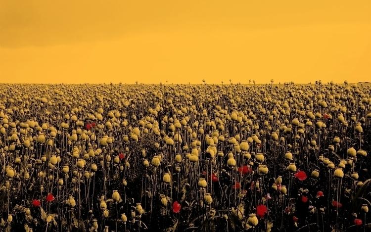 art, cannabis, opium - natashachenkov | ello