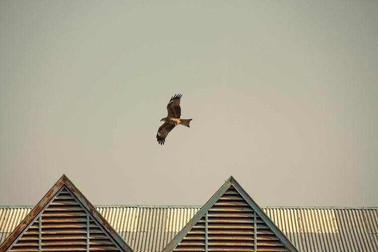 Reach flow Eagles sky. Kathmand - alexreigworks | ello
