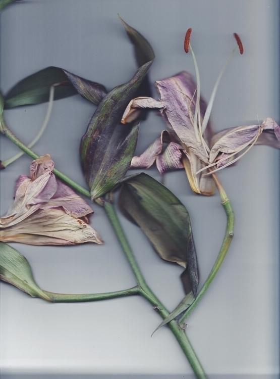 Flowers January - fauna, flora, lilies - munibar | ello