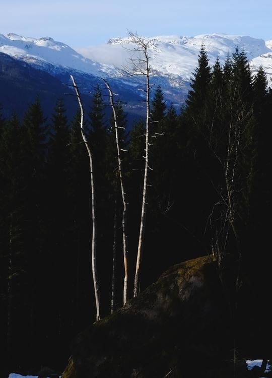 Dead trees light - espengya | ello