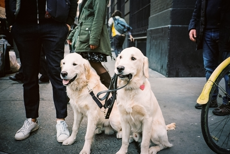 Good Dogs - photography, 35mm, film - danbassini | ello
