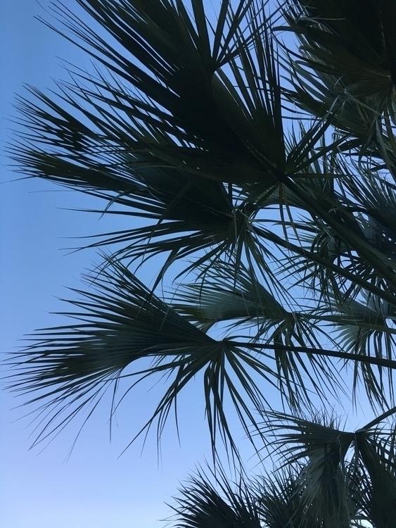 Balmy evening Florida - iphoneography - cerebellarium | ello