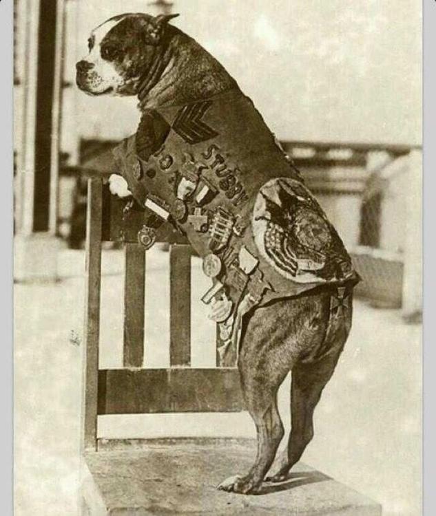 Sgt. Stubby decorated war dog W - djohnmiller1990 | ello