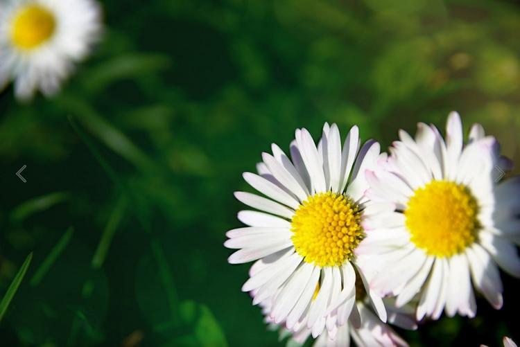 photography, spring - binome | ello
