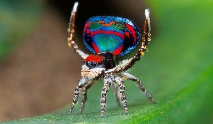 Dünyanın En Renkli Hayvanları:  - senadalgic   ello