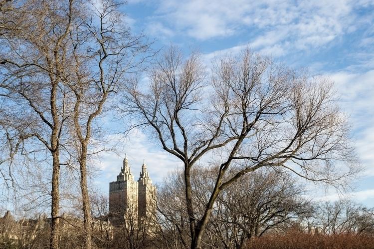 Central Park mornings - danielkrieger | ello
