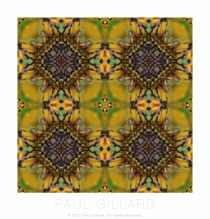 Pattern created photo sunflower - paulgillard | ello