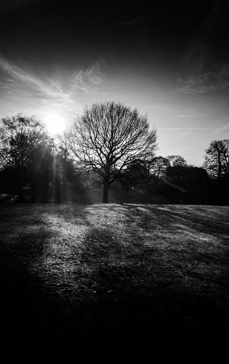 Good Morning ... | Royal Parks - fabianodu | ello