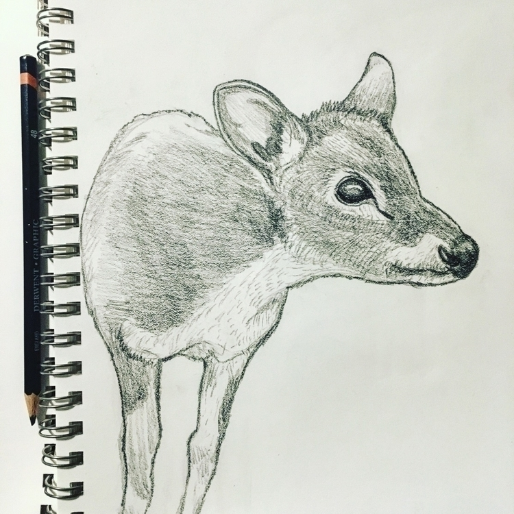 Pudu sketch! Year 35 Day 22 - pudu - mydiagonallife | ello