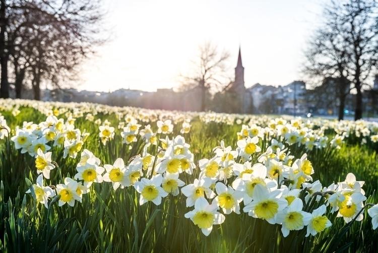 Spring Luxembourg - konradphoto | ello
