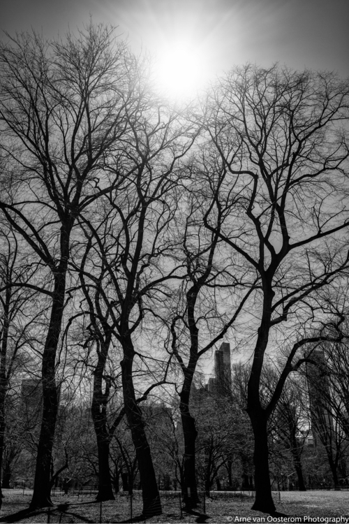 Central Park York City - documentaryphotography - arnevanoosterom | ello