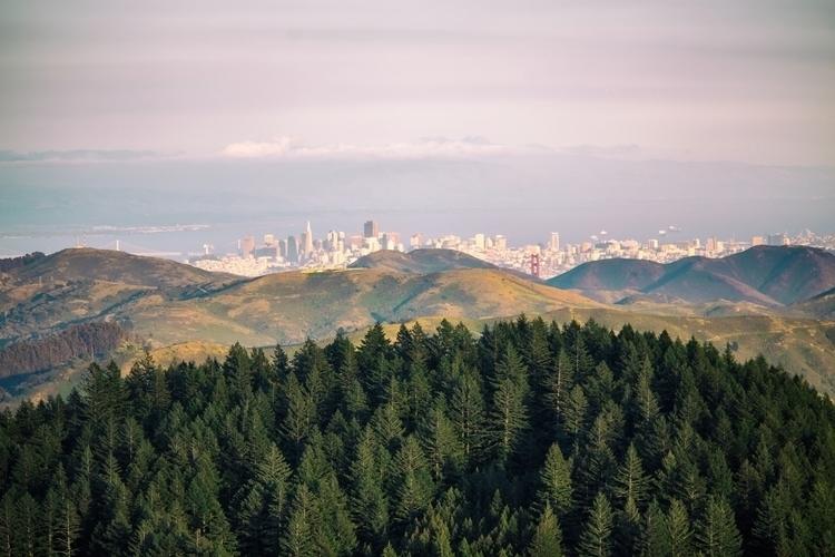 Trees... Marin, CA - thomashawk | ello