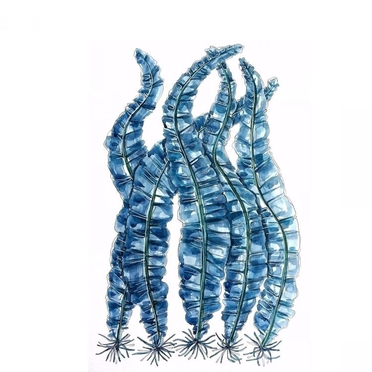 seaweed, blue, colour, design - aliellydesign | ello
