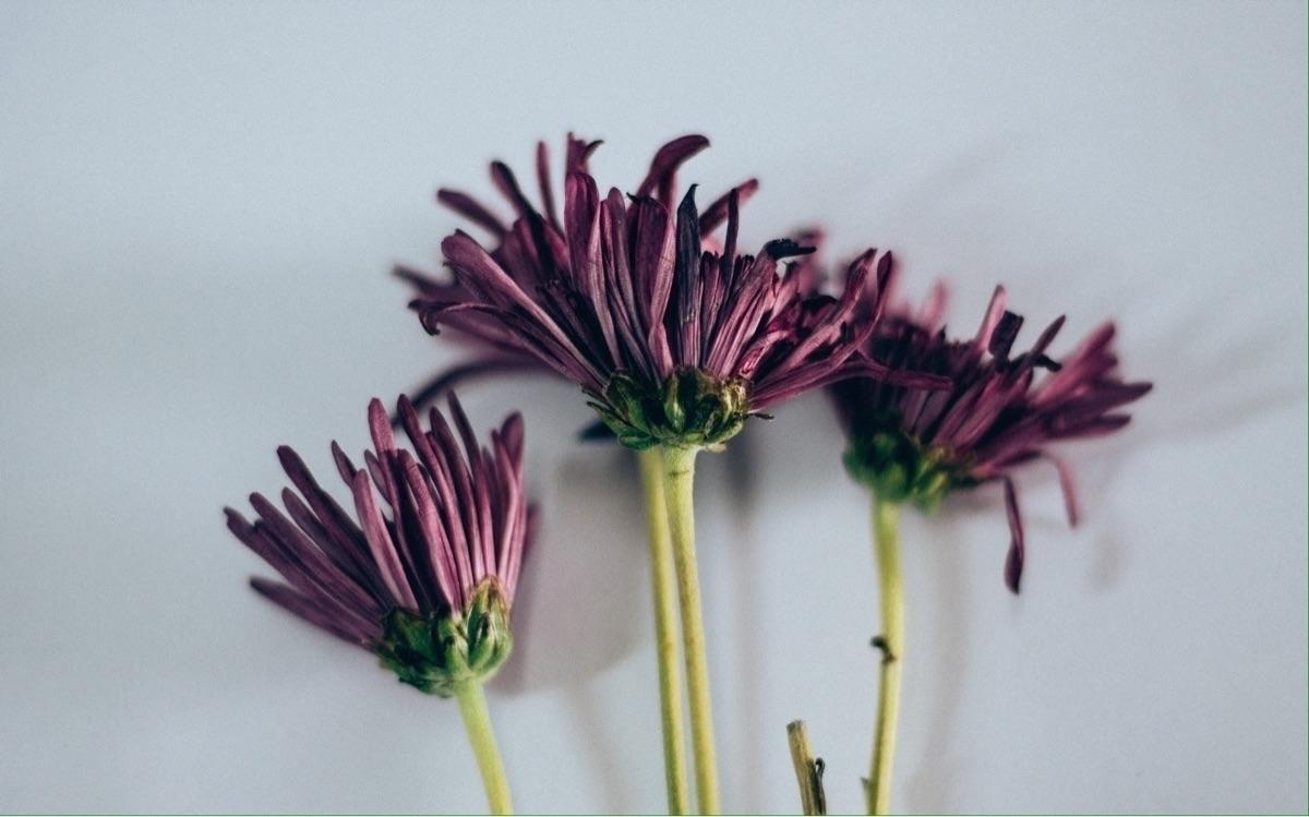 details - flower, purple, nature - fherphz | ello