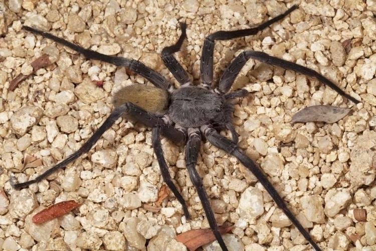 Monster spider haunts abandoned - bonniegrrl   ello