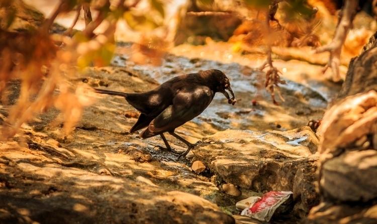 bird - melvin1401   ello