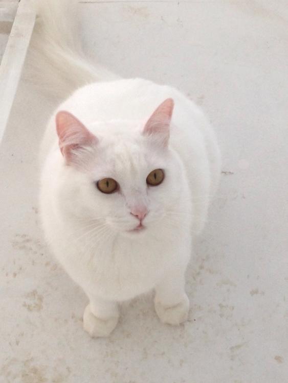 Hou - cat, love, ello - vhc | ello