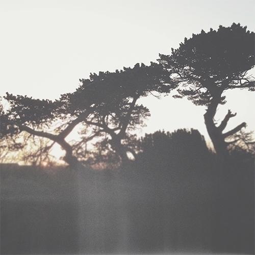Teachers / Trees beautiful teac - kashyapi | ello