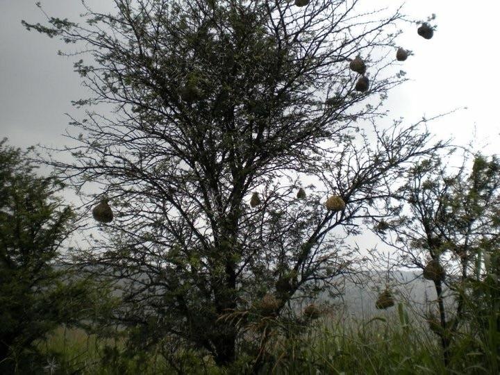 Family Tree - mindy2886   ello