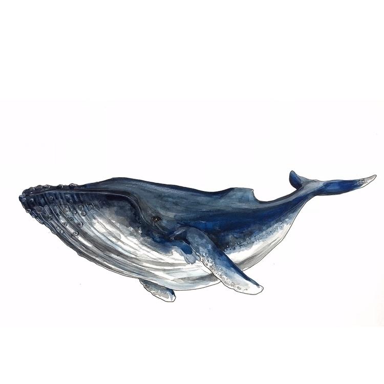 whale, illustration, blue, colour - aliellydesign | ello