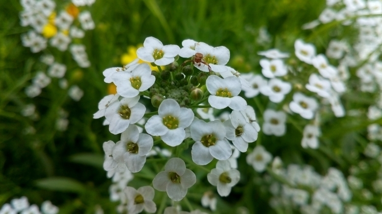Flower, Photography - smsr0100451 | ello