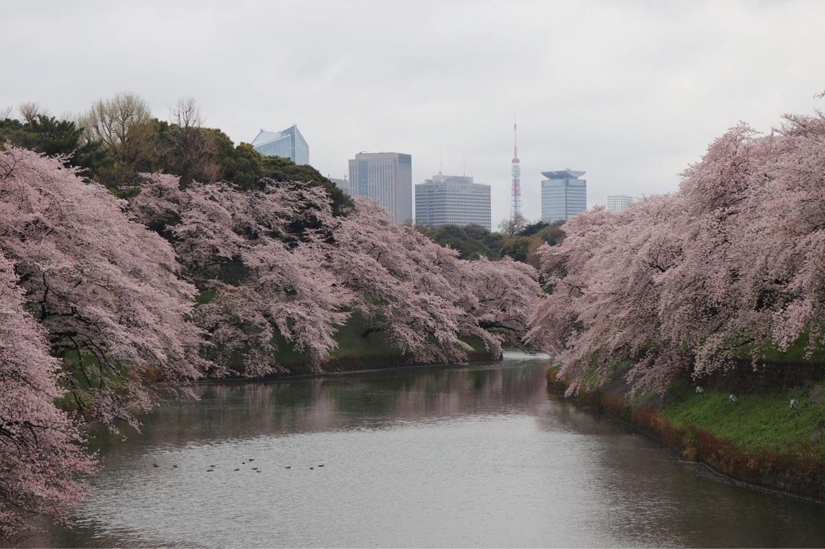 Cherry blossoms Tokyo - tokyo, japan - waygaijin | ello