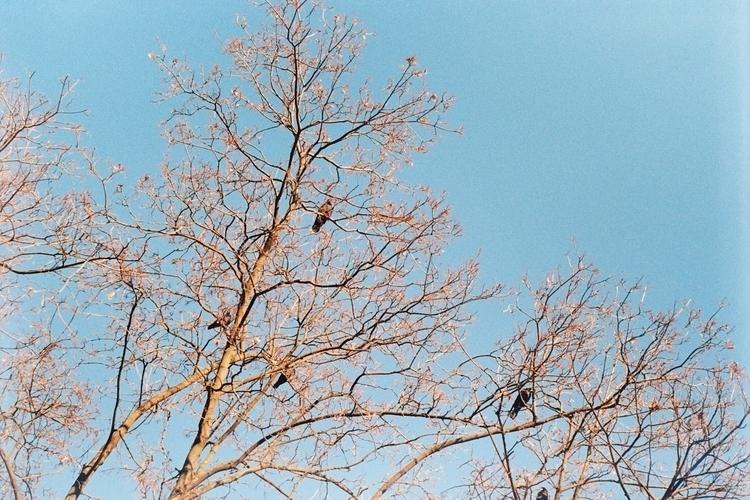 spring awaitings Smena 8М Kodak - alinele13   ello